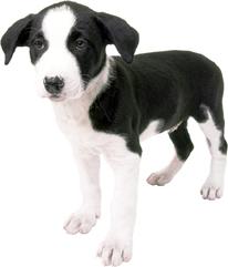 PuppyWellness