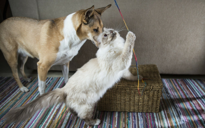 image for Emergency Preparedness for Your Pets